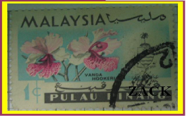 Medinilla magnifica - Uva Rosa, Showin Medinilla, Orquidea de Malasia, Árbol de Araña, Kapa-kapa - Plantas Hawaianas y Flores Tropicales