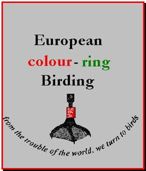 Colour Ringing