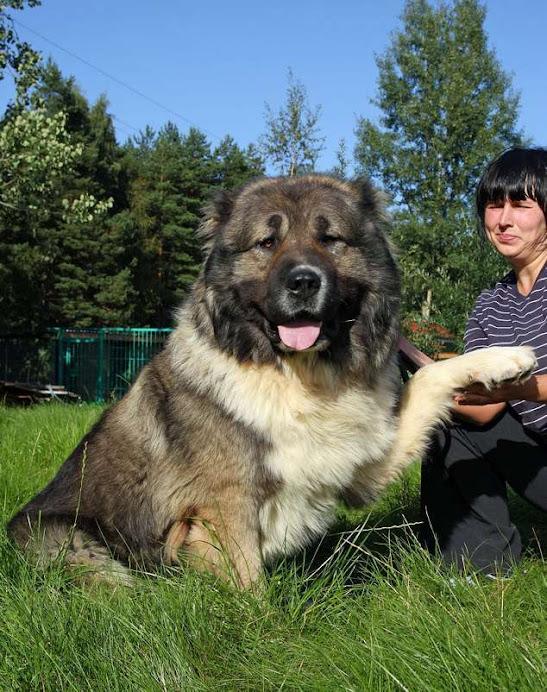 Чингиз Медведь