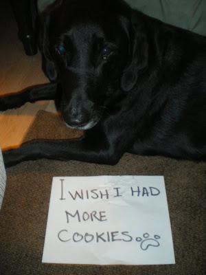 animal, dog, wishes, i have 1 wish, i wish for more cookies, cookies, treats, dog wishes
