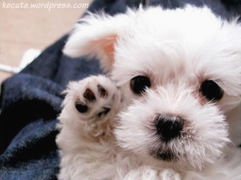 Cute Puppies Pictures on Adorable Cute Cuter Lol Cutest Puppies