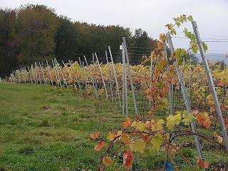 wijngaard onderweg