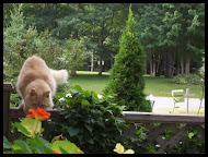 Taking Time to Smell The Flowers