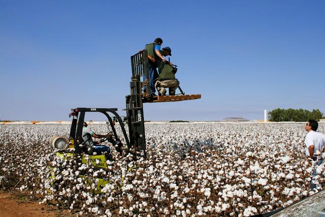 Documentário algodoeiro