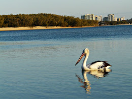 Pelican on Maroochy River
