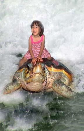 [turtle.jpg]
