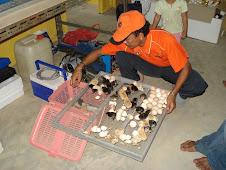 Ternakan Ayam Kampong