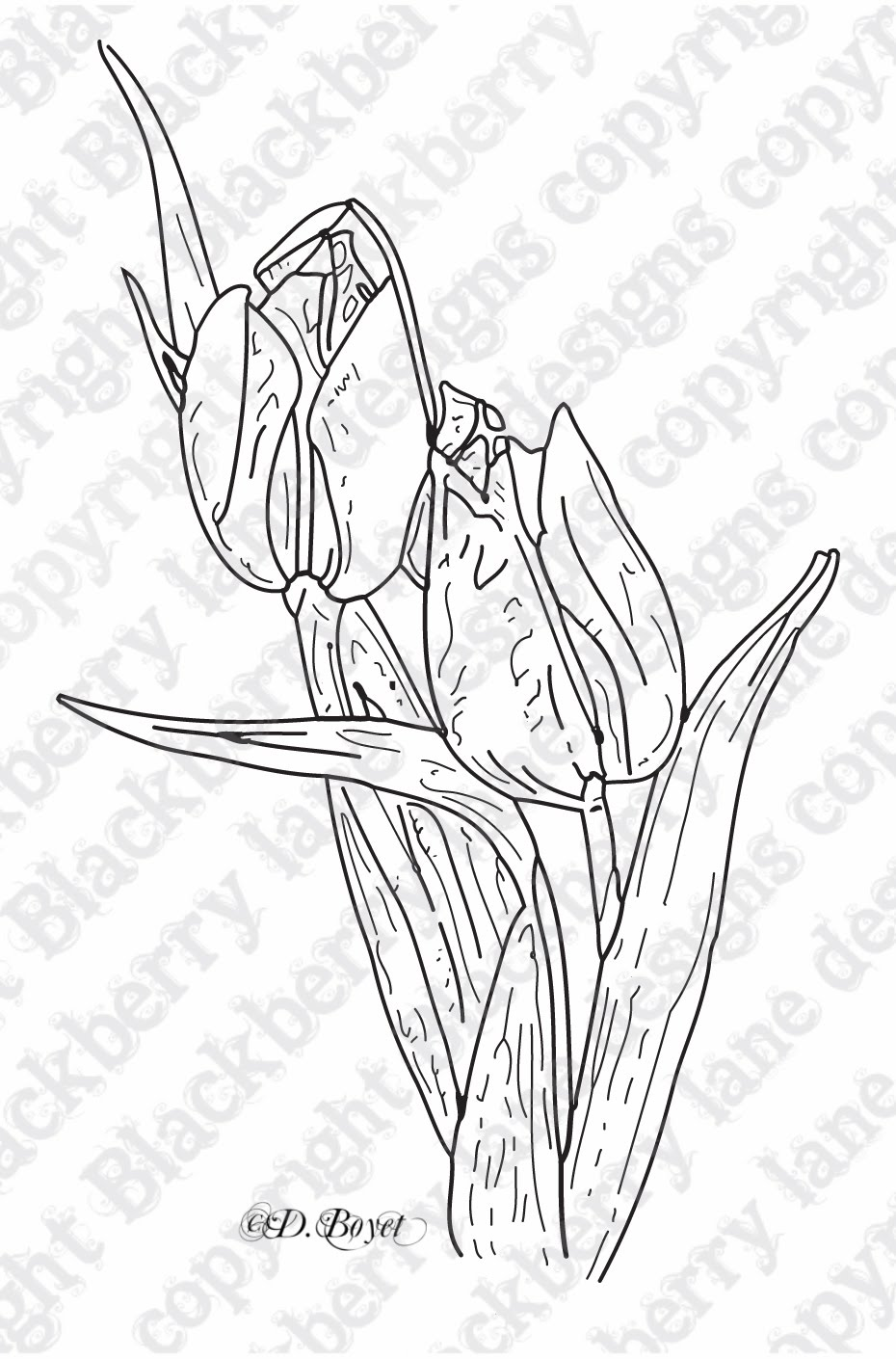 Line Drawing Tulip : Tulip line drawing related keywords