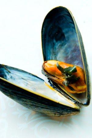 [mussel]