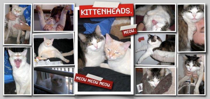 Kitten Heads