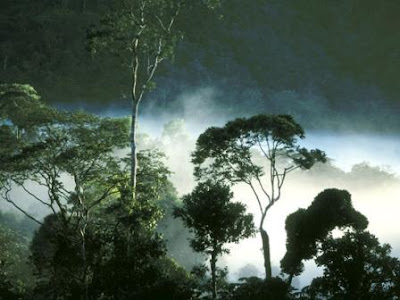 Hutan Tropis Terbesar di Dunia