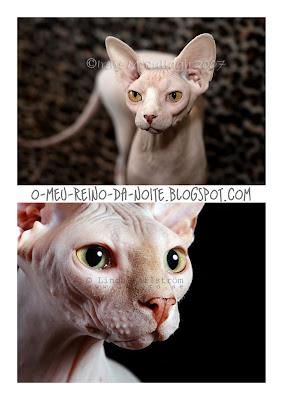 Sphynx cat deviantart fotografia ugly cats feio feios gatos gato gata gatas cute