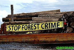 stop forest crime