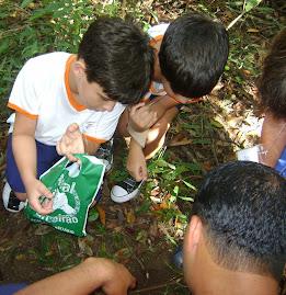 Plantando Nossa Árvore