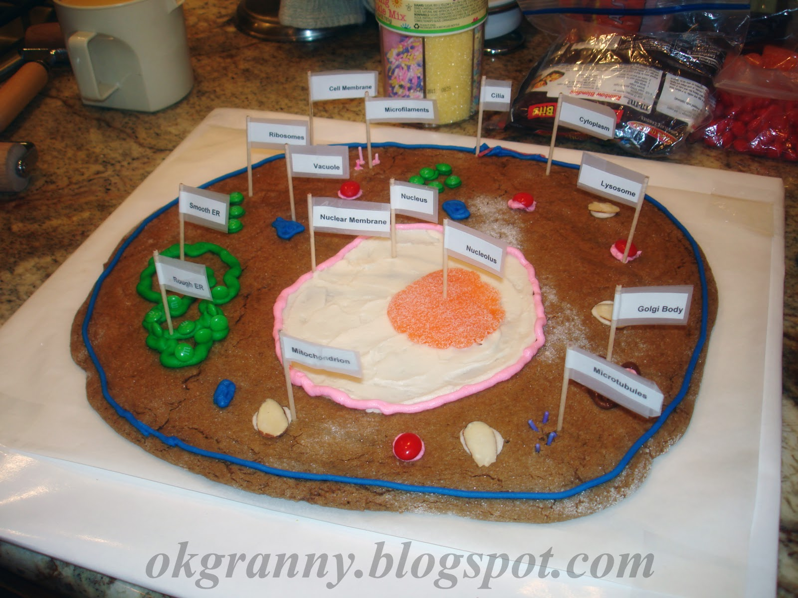 Sample of Plant Cell Projects http://www.sylwiagrzeszczak.com/edible-plant-cell-model-ideas