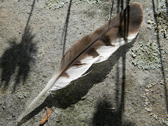A Feather to Consider