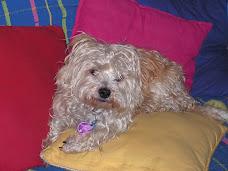 My dog Monty