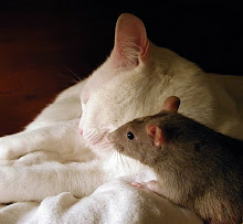 ♥Meaw and the beloved rat.....