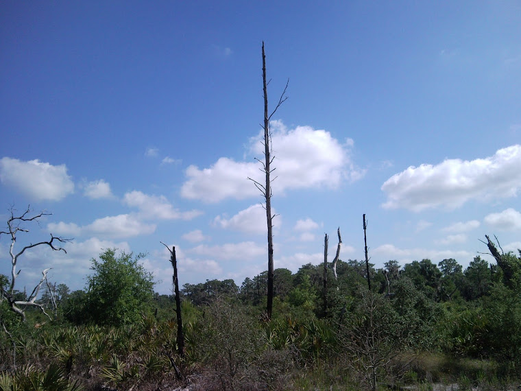 Boyette Scrub Preserve