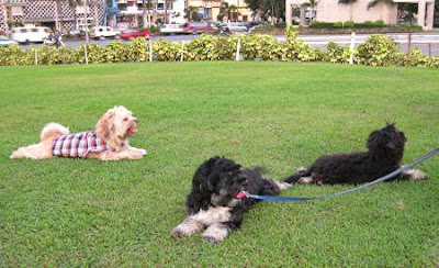 dogs in the lawn of the Cultural Center of the Philippines