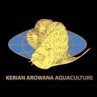 Kerian Arowana Aquaculture