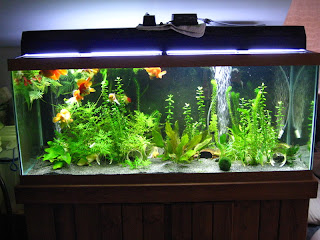 1000 images about aquariums on pinterest for Fancy fish tanks