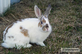 photo animal lapin