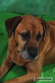 portrait d'un chien en studio photo