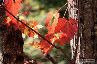 photo feuilles d'automne et arbres