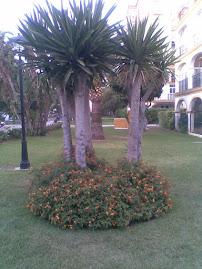 Las palmeras del parque