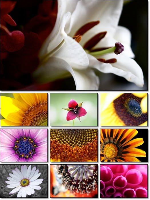 wallpaper macro. Flowers in Macro Wallpapers