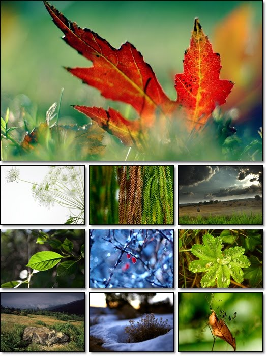 Animated Nature Wallpapers Free Download. Free Download