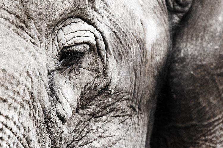 [Ojo+de+elefante.jpg]
