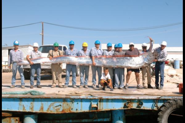 And I Think to Myself...What A Wonderful World.: Creature ... Oarfish 56 Ft