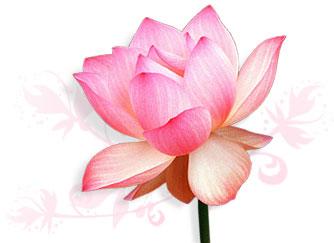 [lotus.jpg]