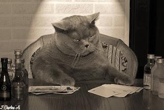 толстые коты, прикольные животные
