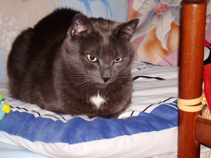 MON CHAT - MY  CAT - MEINE KATZE The most beautiful in the whole world n o ?