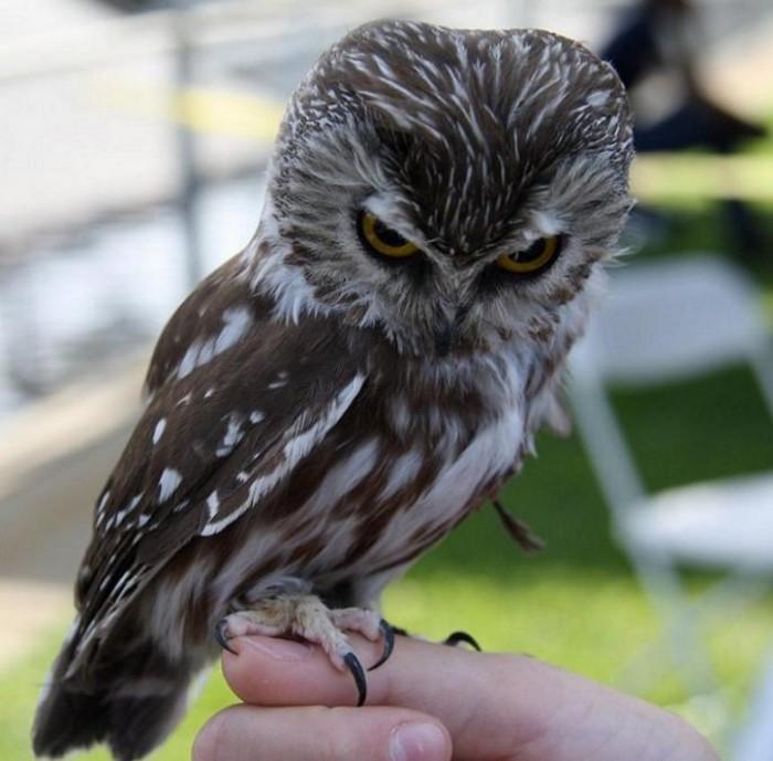 Internet creatures evil owl - Funny bird pics ...
