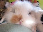 Un nuovo amico! Flappy il nostro coniglietto.