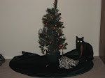 My Charlie Brown Christmas tree and Tesia
