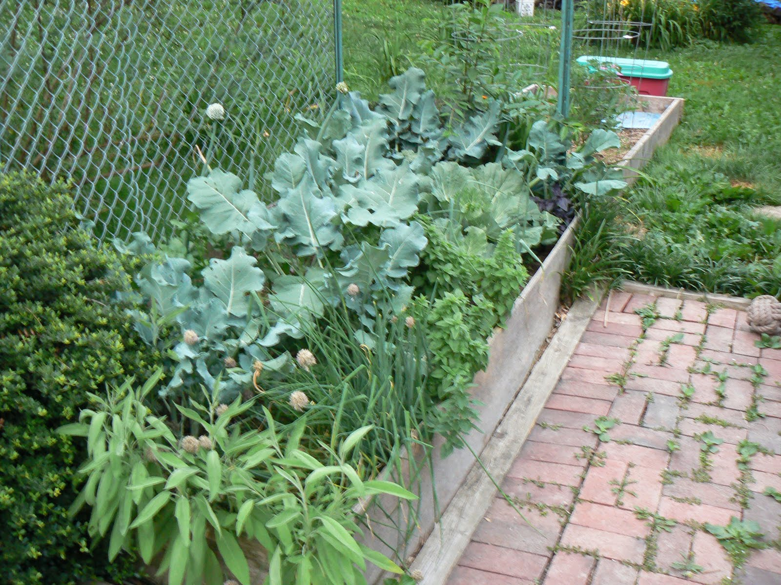 Plants To Plant Why We Love Raised Beds