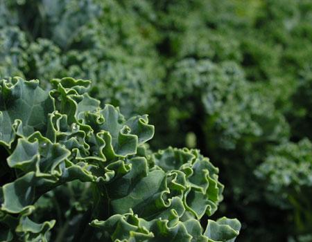 http://4.bp.blogspot.com/_CQSwa0wE78g/THXu4H9wGvI/AAAAAAAAAHI/z3NrAwFZq-s/s1600/sayuran+hijau.jpg
