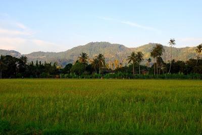 Balik Pulau Paddy Field, Penang