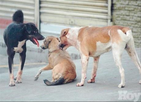 Experto advierte país está ante una epidemia de rabia animal