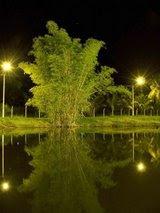 Lago dos Buritis