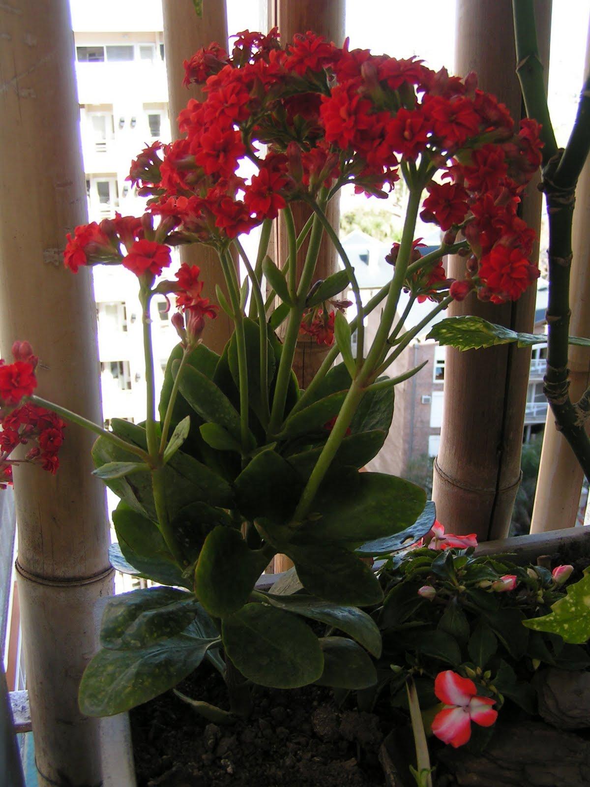 Flores todo el a o no hay problema los invito a - Plantas para el jardin todo el ano ...
