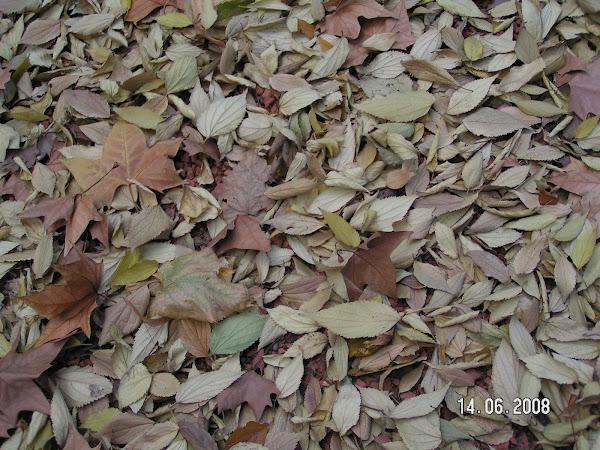 Compostera cuidar de tus plantas es for Horticultura definicion