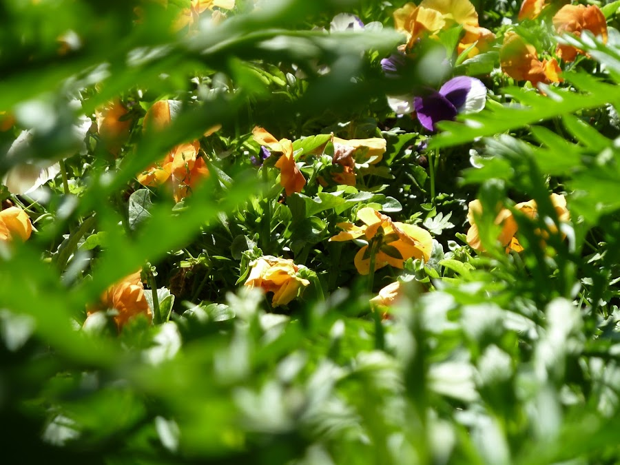 Tareas de primavera for Jardines de primavera