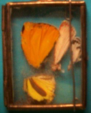 [cropped+butterfly+glass.jpg]