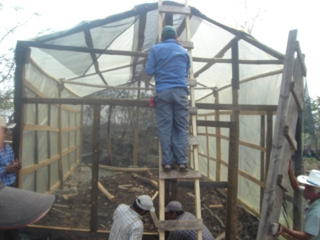 Produccion de arboles forestales consideraciones para el for Materiales para un vivero